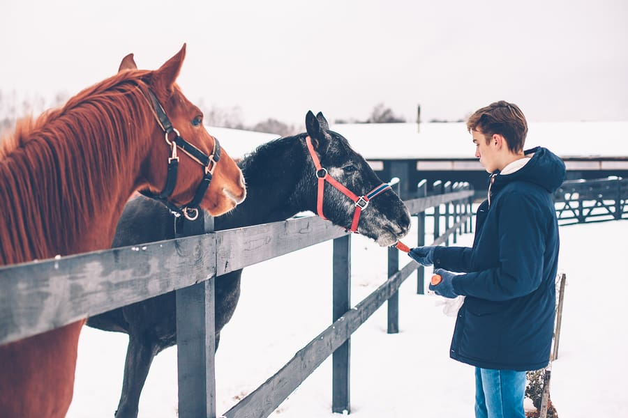 How Does Equine Therapy Work?